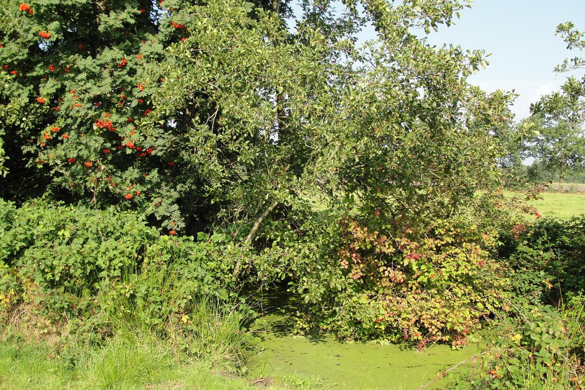 Fruitlandschap De Friese Wouden